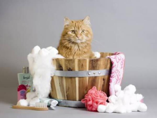 Ba�ar al gato