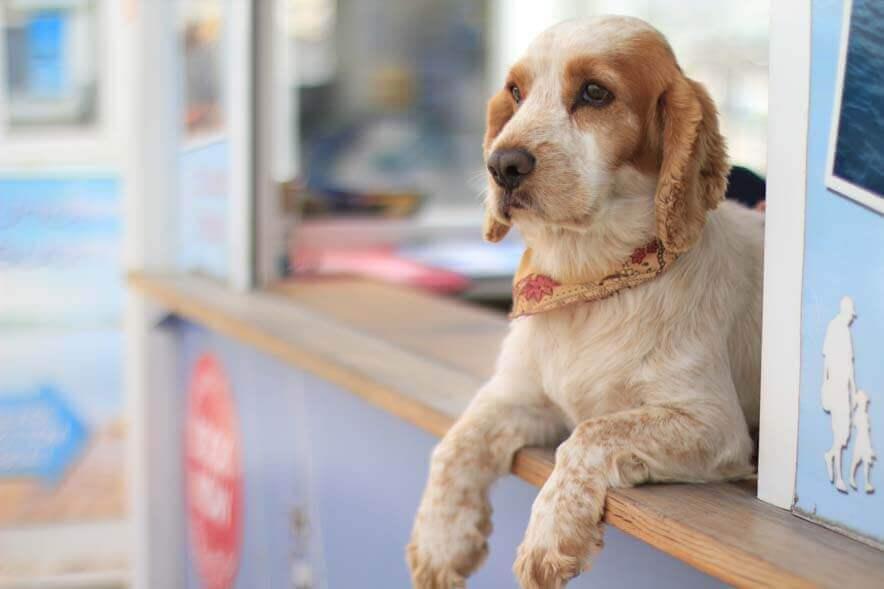 Tiendas Mascotas en burgos