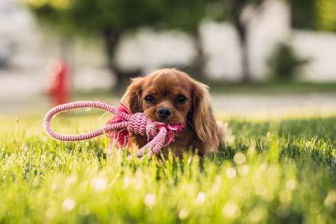 Adiestradores Caninos y Felinos en Valladolid