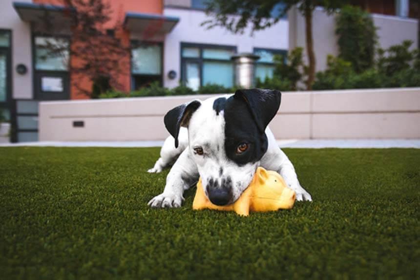 Entrenador canino en Burgos