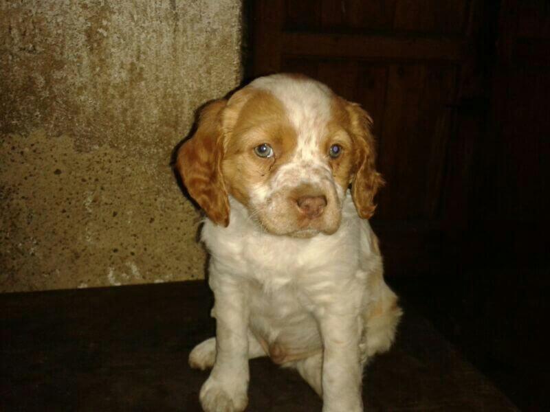 adoptar_perro