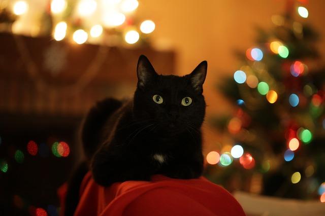 Gatos y los arboles de navidad