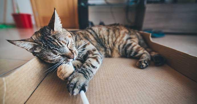 Cajas de carton y gatos