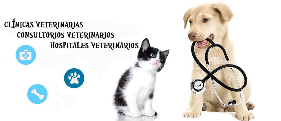 clinicas veterinarias leon