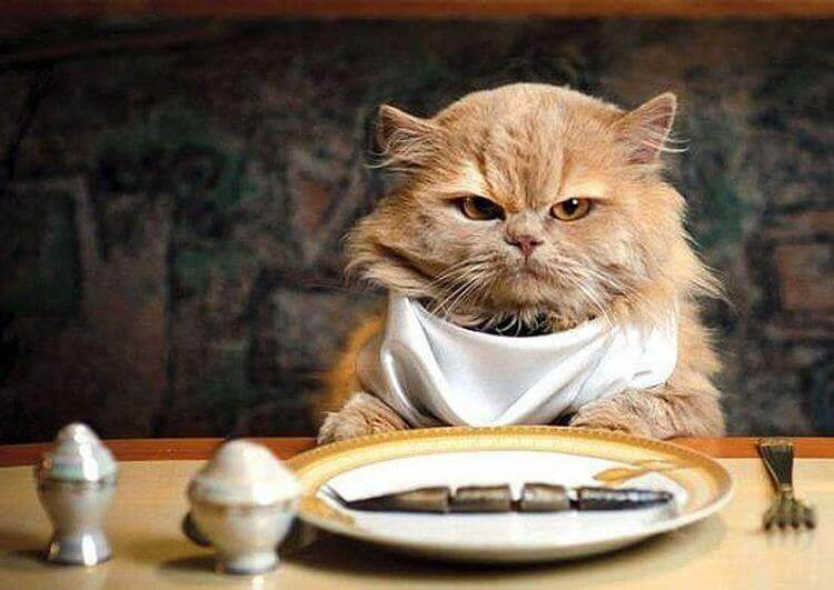Alimentos beneficiosos para tu gato