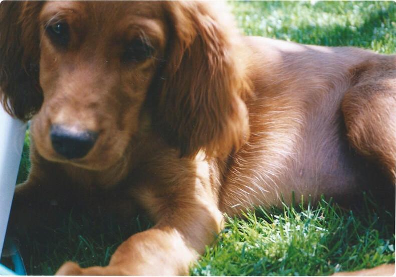cuidados de perros de caza