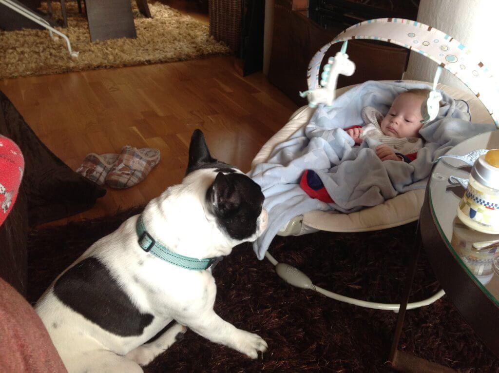 Preparar a nuestro perro para la llegada de un bebé