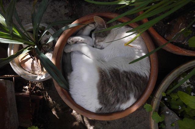 Consejos durante el calor para nuestro gato