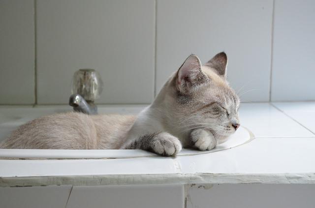 Consejos para nuestro gato en verano