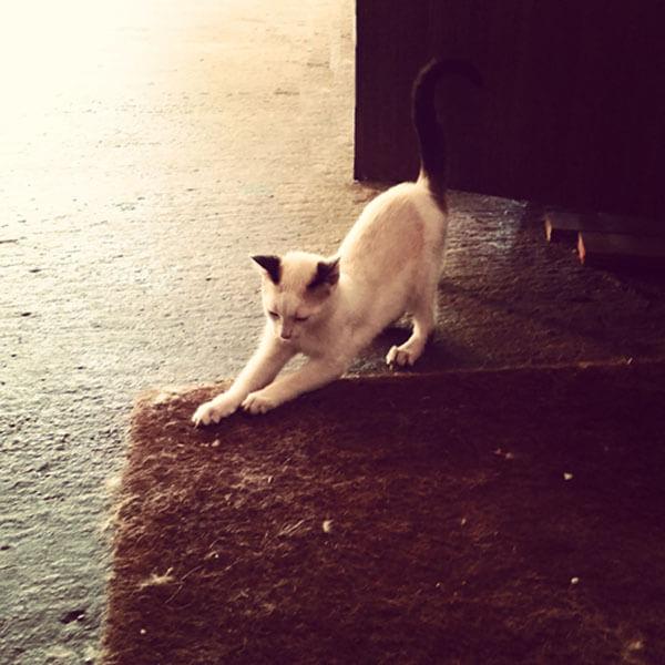 El gato ara�a los muebles