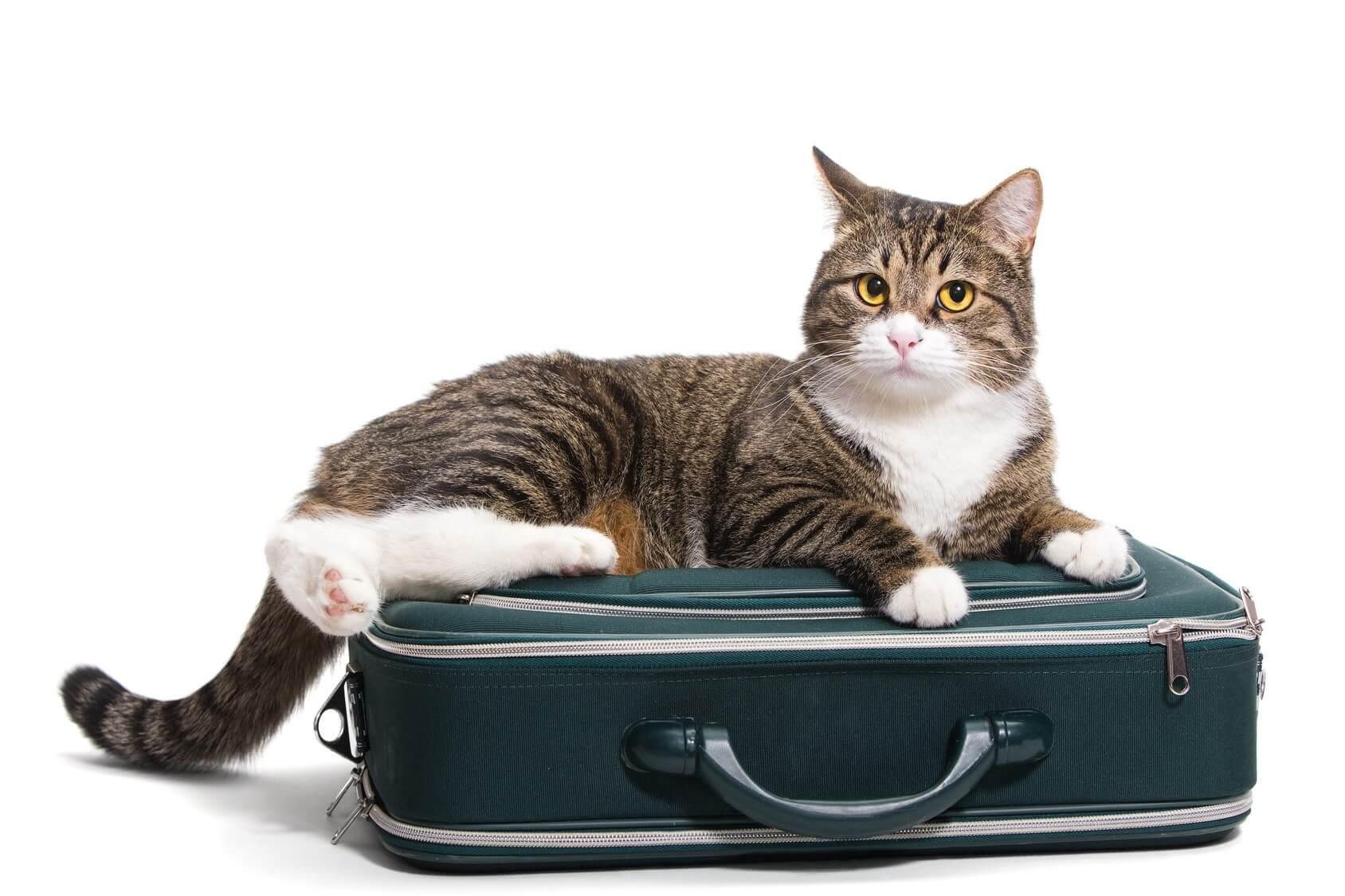 Que hacer con mi gato en vacaciones