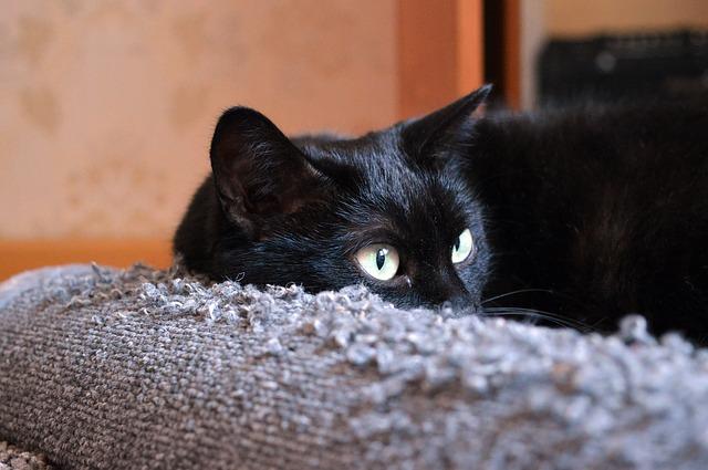 Gatos ara�an los muebles