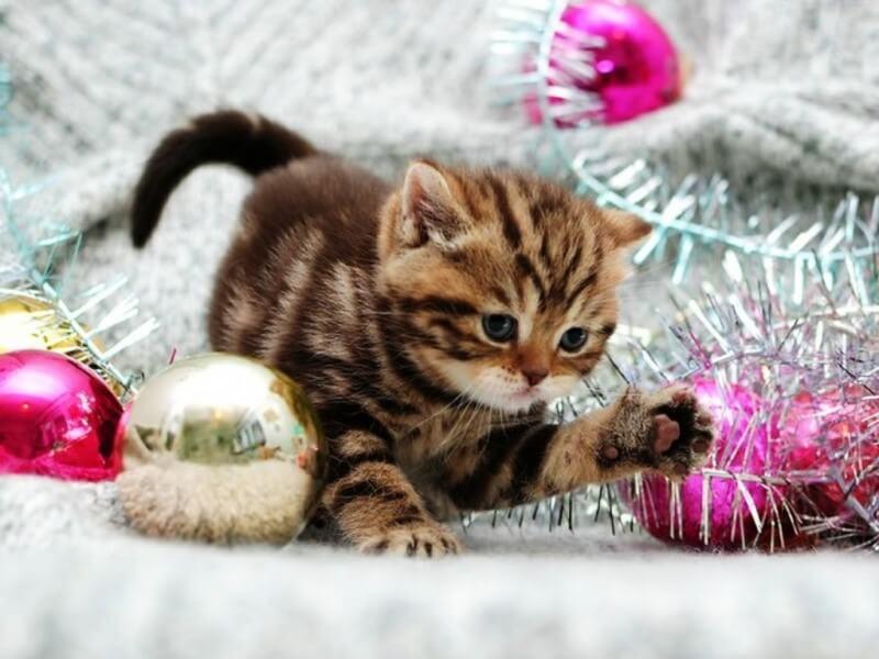 Mascotas y Navidad