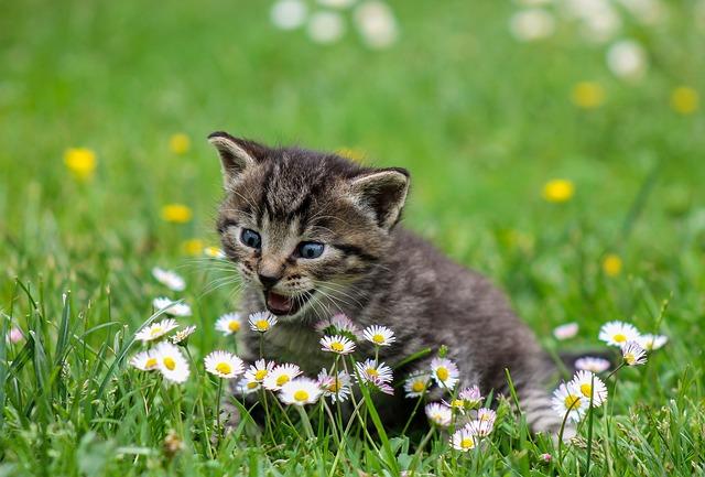 La primavera y los gatos