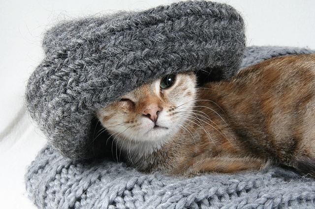 El fr�o en los gatos