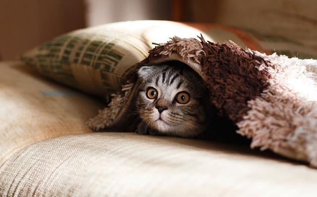 El gato con invitado en casa