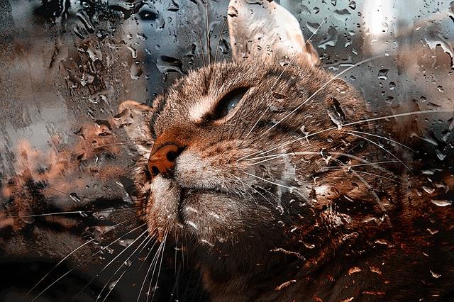 Las tormentas y los gatos