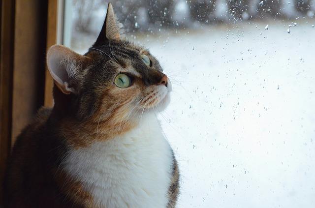 Los gatos en las tormentas