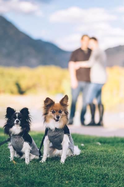 Guarderias Caninas