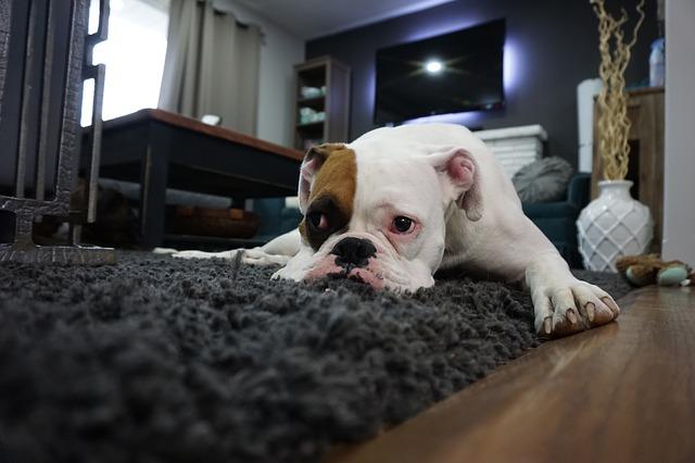 Invitados en casa y el perro