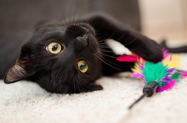 Juegos para estimular a los gatos