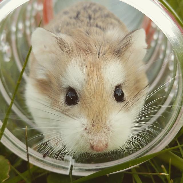 Lenguaje corporal de los hamsters