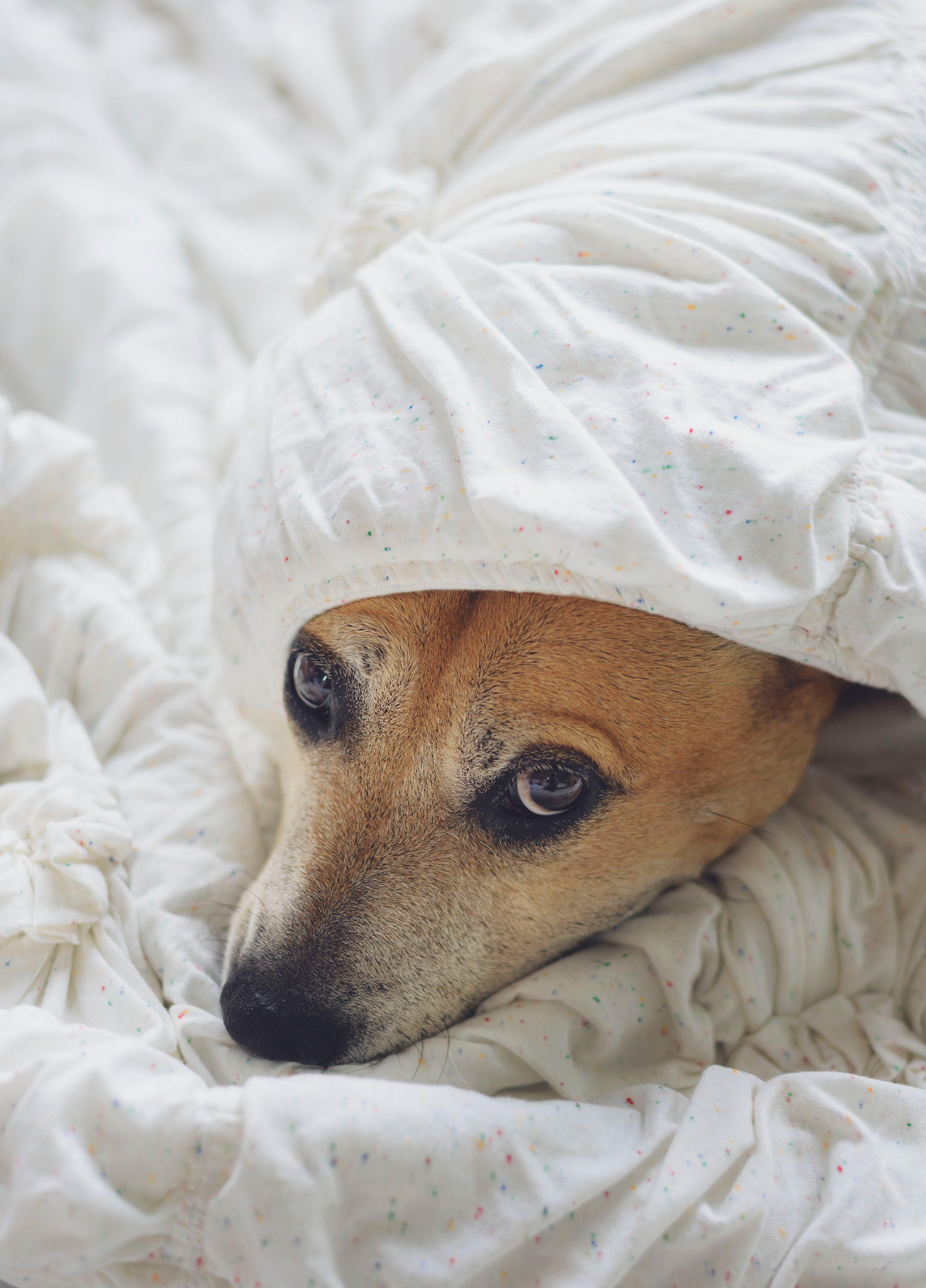 Perros con miedo a los ruidos