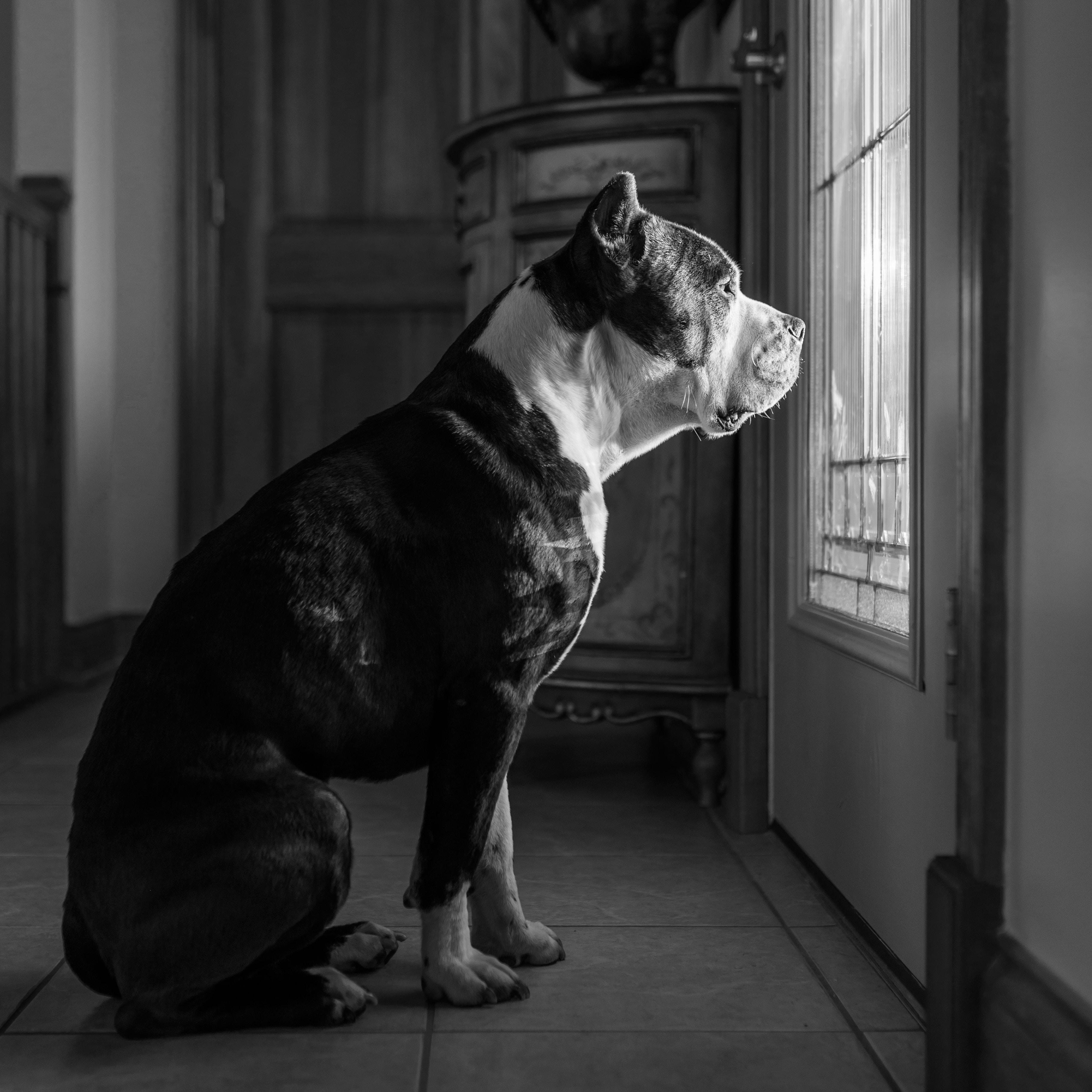 Perros con miedo a la soledad