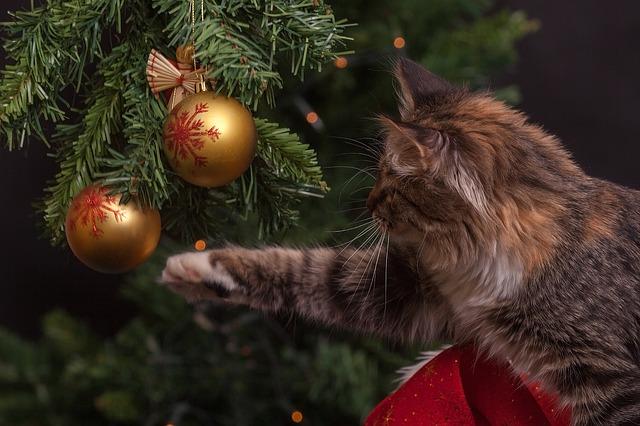 Arboles de navidad y gatos