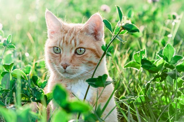 6 peligros del verano para los gatos