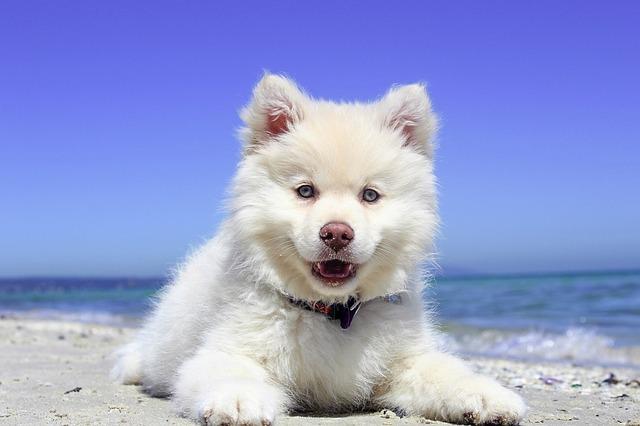 En verano los perros con mucho pelo