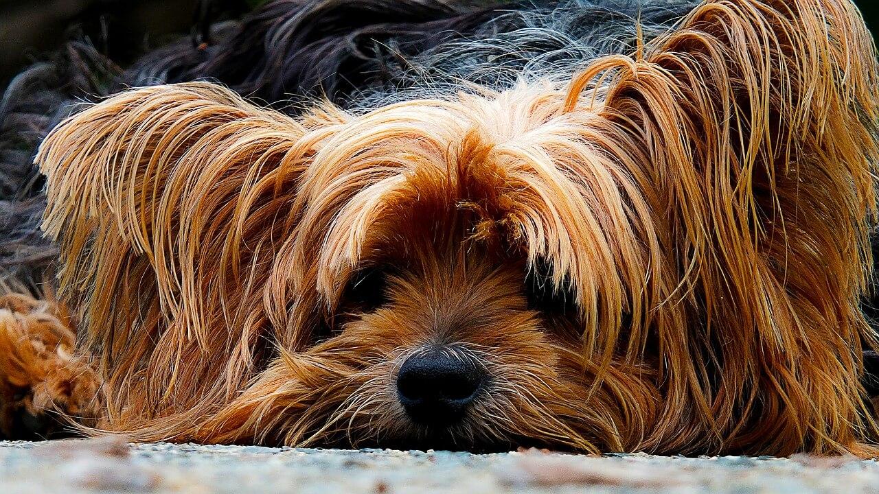 peluqueria_canina