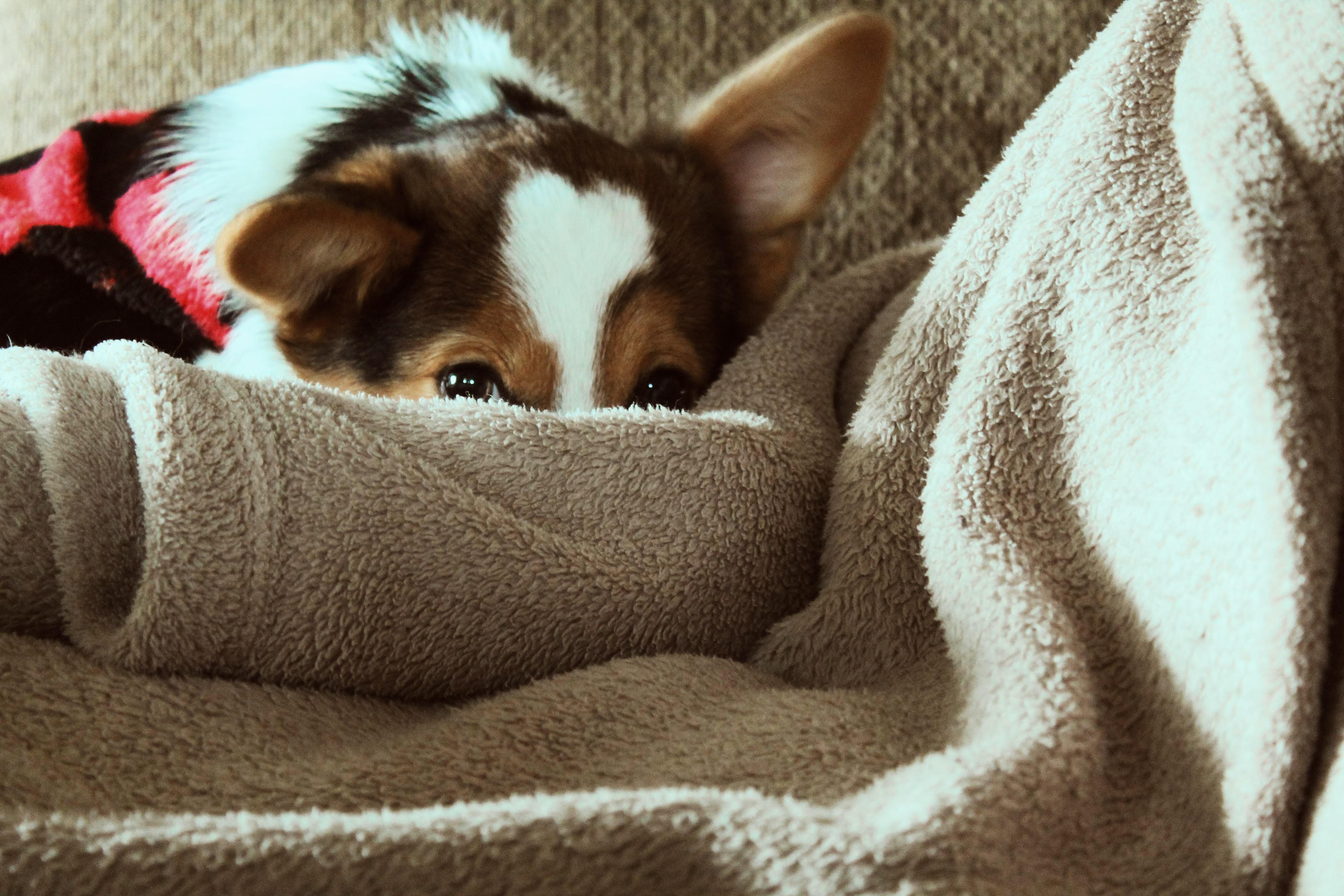 Perros con miedo a las tormentas
