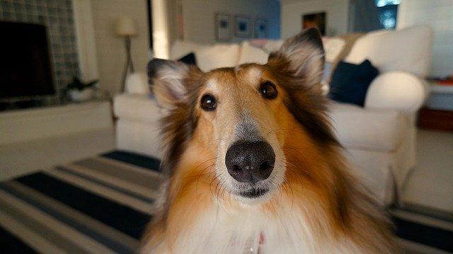 Ideas para que tu perro este entretenido