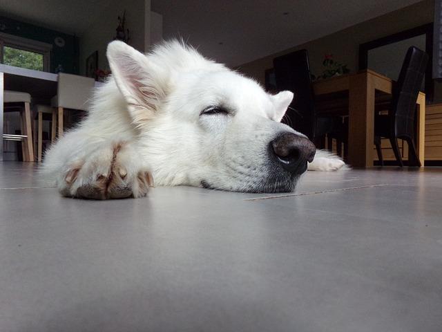 10 consejos para los perros en verano