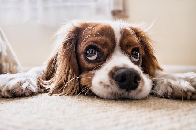 Fotografiar al perro