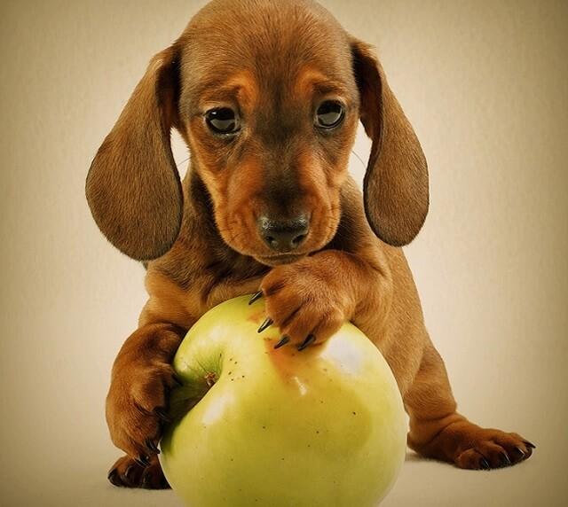 Manzana alimento beneficioso para perros