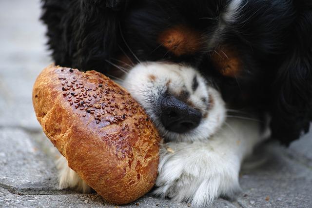 Cantidad de comida para mi perro