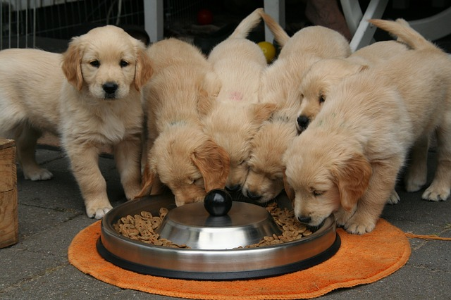 Perros glotones