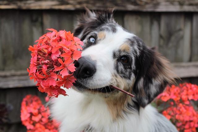 La primavera y los perros