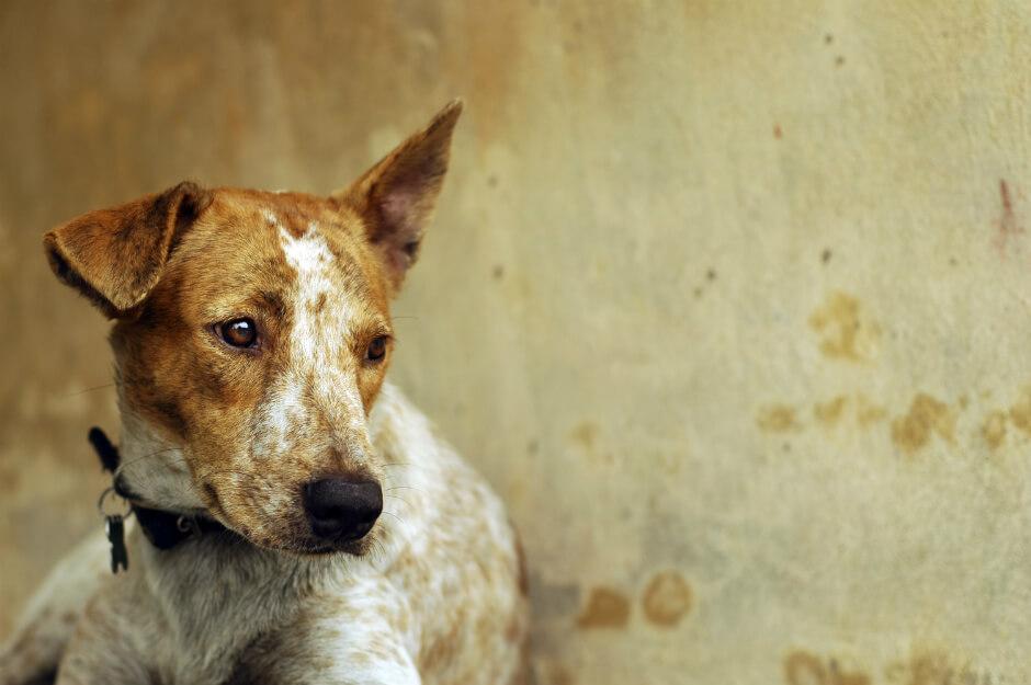 Asociaciones Animales