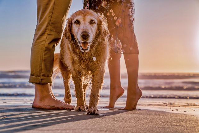 Playas para mascotas