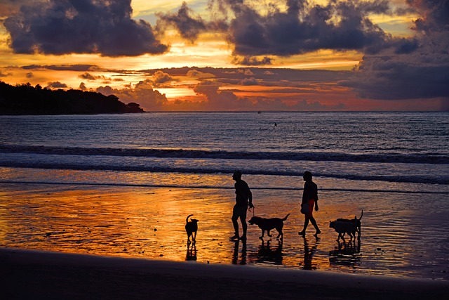 Playas que aceptan mascotas