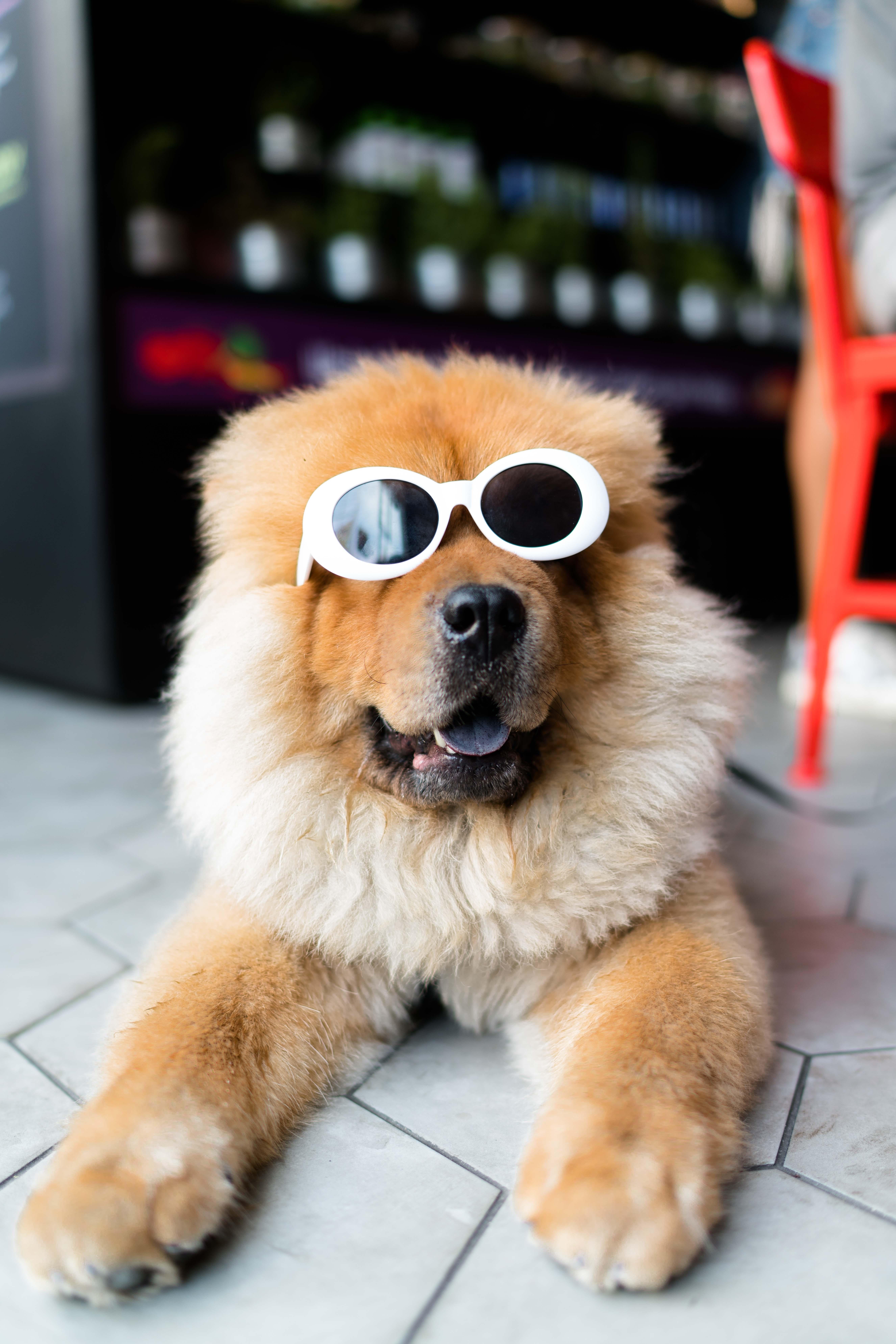 Que hacer con los perros con mucho pelo en verano