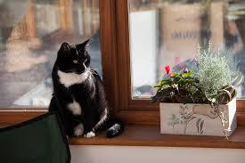residencia para gatos
