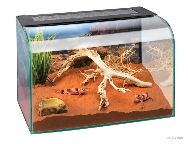 Terrario para gecko