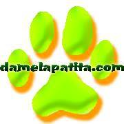 Adiestradores Caninos Puente la Reina Damelapatita.com