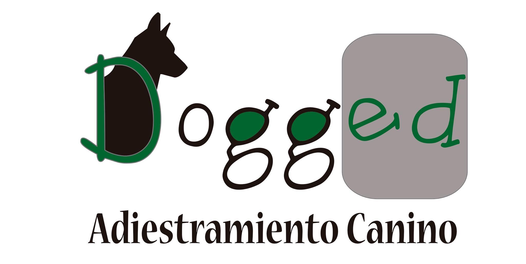 Adiestradores Caninos en Barcelona Dogged