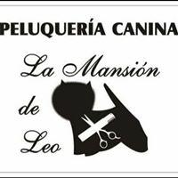 Peluquerias Mascotas Zaragoza La Mansion de Leo