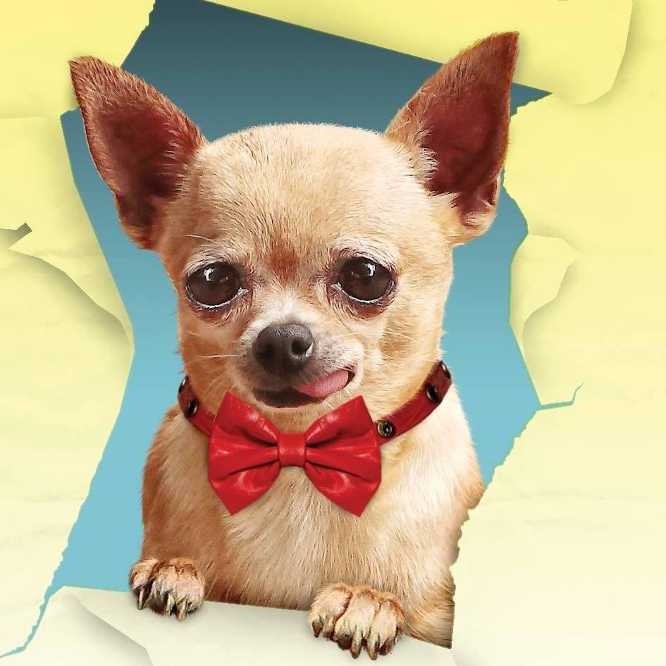 REsidencias Caninas en Santa Coloma de Cervell� Hostal Mascotas